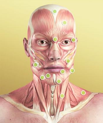 Glowa I Szyja Czlowieka Budowa Anatomia Medme Pl